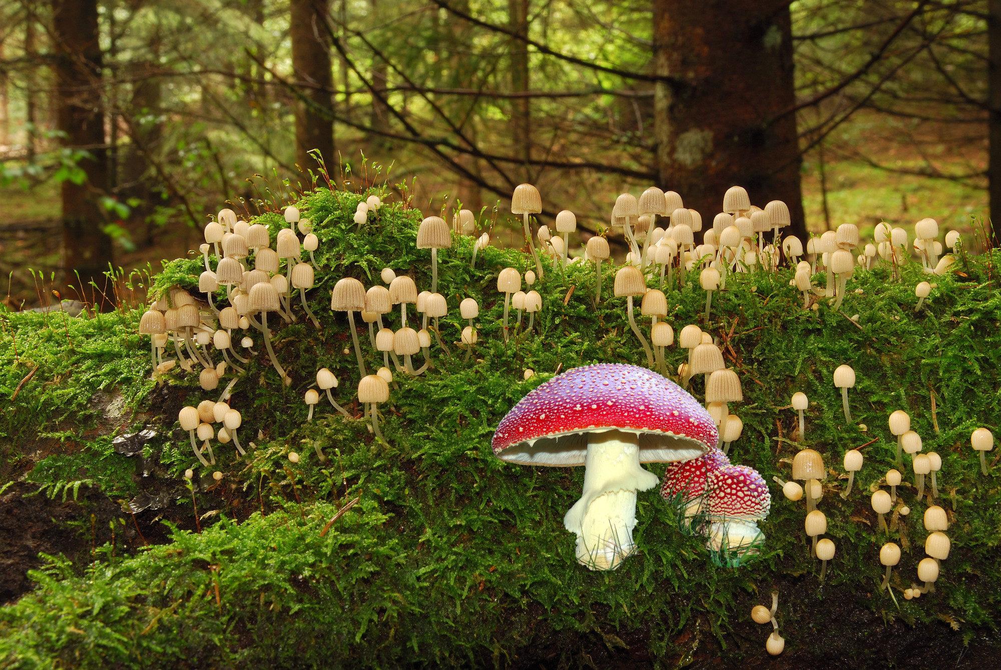 Pilze mit Markus Flück